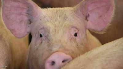"""الفلبين تعلن """"حالة كارثة"""" بسبب حمى الخنازير الأفريقية"""